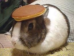 rabbitpancake